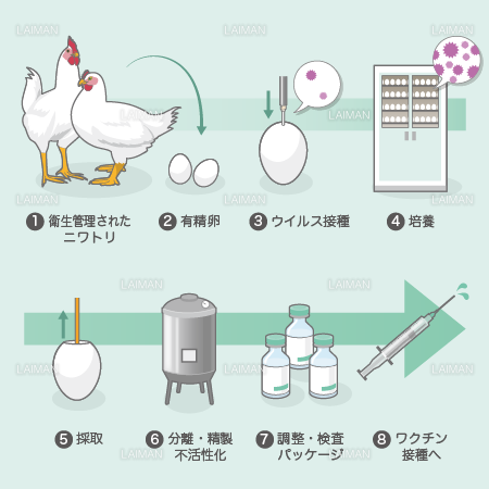 Production of Vaccine